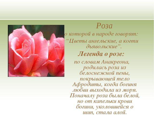 """Роза о которой в народе говорят: """"Цветы ангельские, а когти дьявольские"""". Л..."""