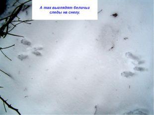 А так выглядят беличьи следы на снегу.