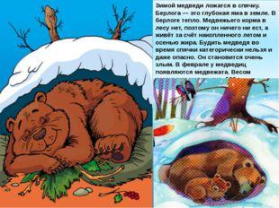 Зимой медведи ложатся в спячку. Берлога — это глубокая яма в земле. В берлоге