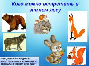 Кого можно встретить в зимнем лесу Заяц, волк лиса не делают запасов на зиму