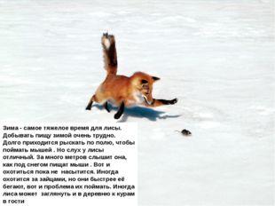 Зима - самое тяжелое время для лисы. Добывать пищу зимой очень трудно. Долго