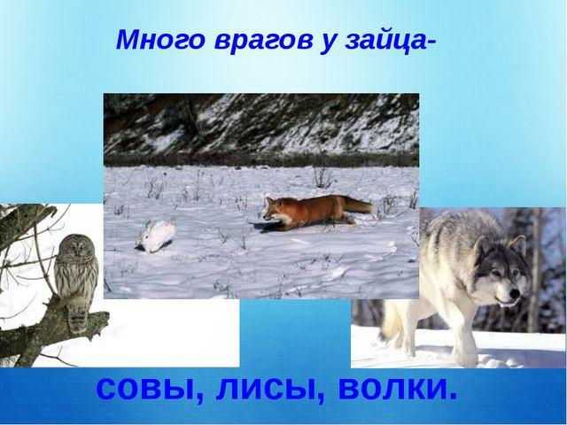 Много врагов у зайца- совы, лисы, волки.