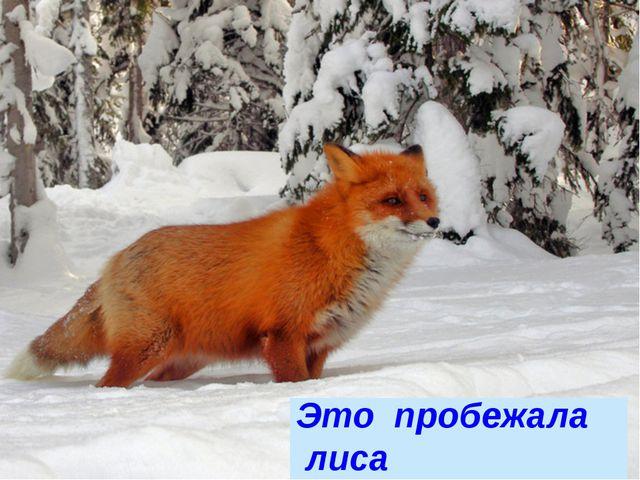 Это пробежала лиса