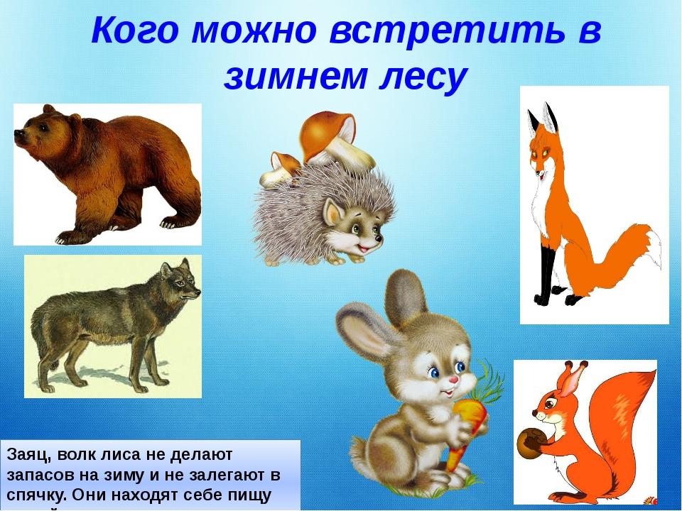 Кого можно встретить в зимнем лесу Заяц, волк лиса не делают запасов на зиму...