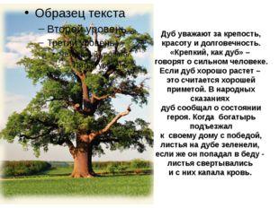 Дуб уважают за крепость, красоту и долговечность. «Крепкий, как дуб» – говоря