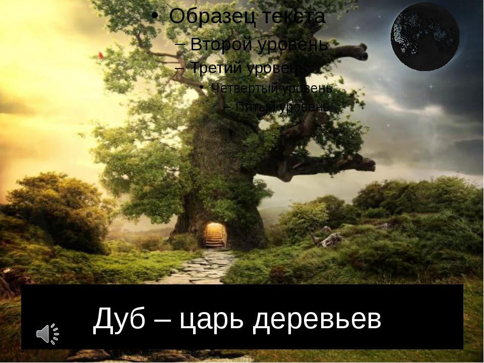 Дуб – царь деревьев