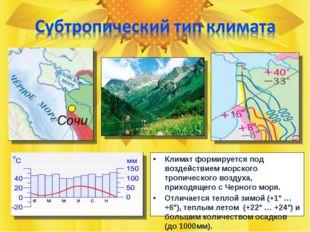Климат формируется под воздействием морского тропического воздуха, приходящег
