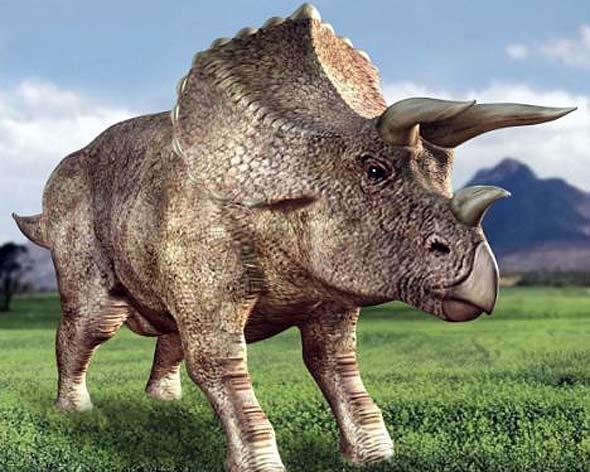 Трицератопсов никогда не существовало