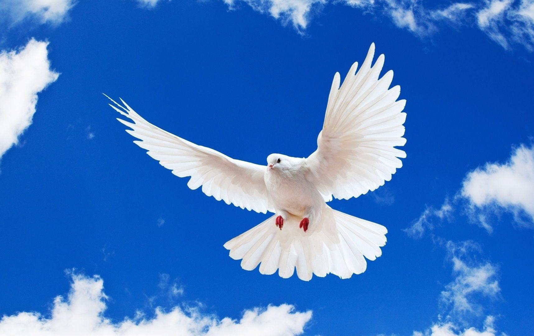 природа белые птицы ветка голуби  № 592588 без смс