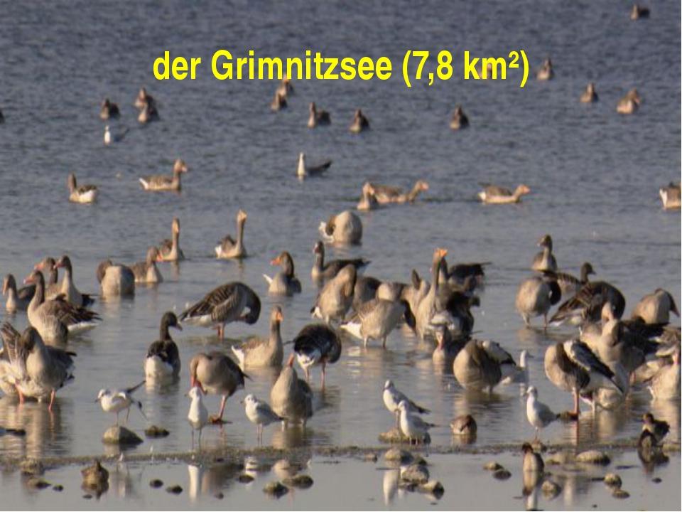 der Grimnitzsee (7,8 km²)