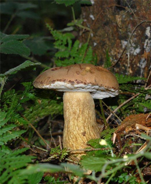 http://www.stihi.ru/pics/2012/09/28/3584.jpg
