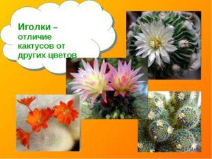 Иголки – отличие кактусов от других цветов