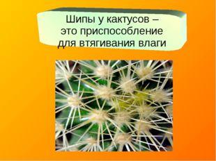 Шипы у кактусов – это приспособление для втягивания влаги