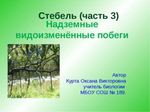 Надземные видоизменённые побеги Автор Курта Оксана Викторовна учитель биолог