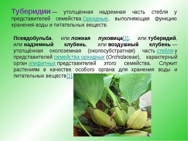 Туберидии— утолщённая надземная часть стебля у представителей семействаОрх...