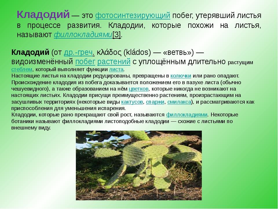 Кладодий— этофотосинтезирующийпобег, утерявший листья в процессе развития...