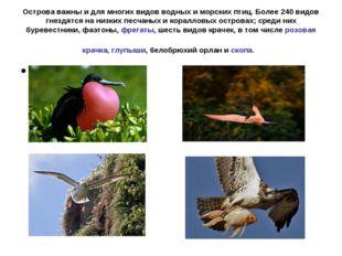 Острова важны и для многих видов водных и морских птиц. Более 240 видов гнезд