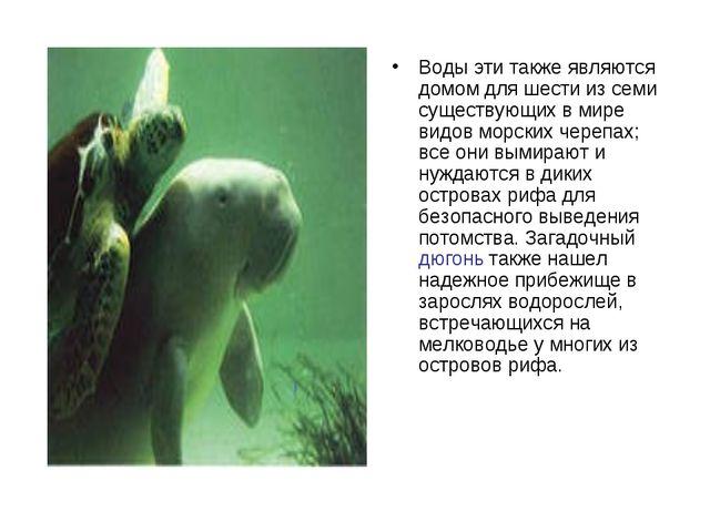 Воды эти также являются домом для шести из семи существующих в мире видов мор...