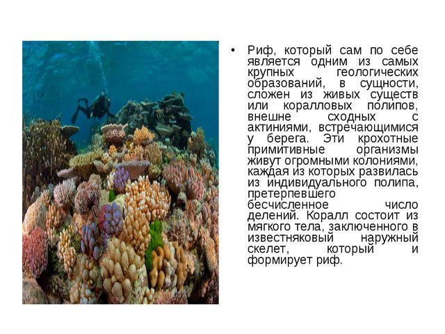 Риф, который сам по себе является одним из самых крупных геологических образо...
