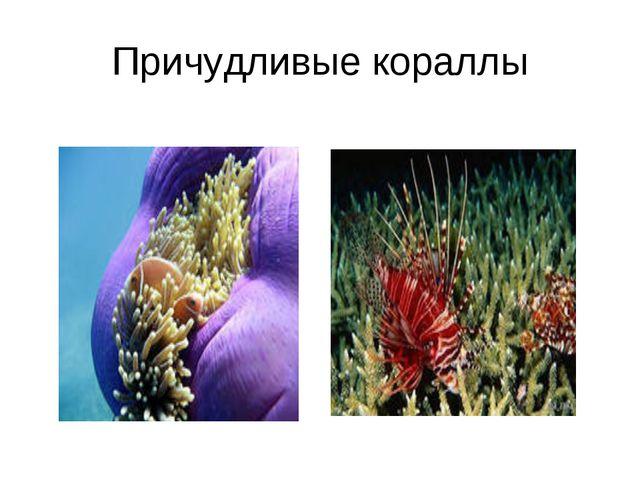 Причудливые кораллы