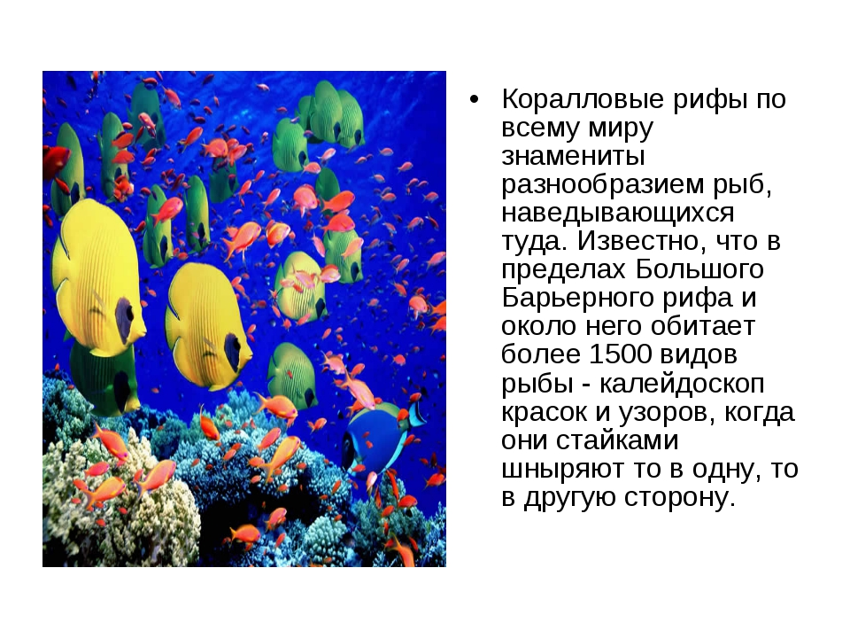 Коралловые рифы по всему миру знамениты разнообразием рыб, наведывающихся туд...