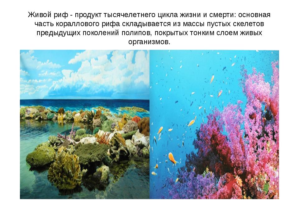 Живой риф - продукт тысячелетнего цикла жизни и смерти: основная часть коралл...