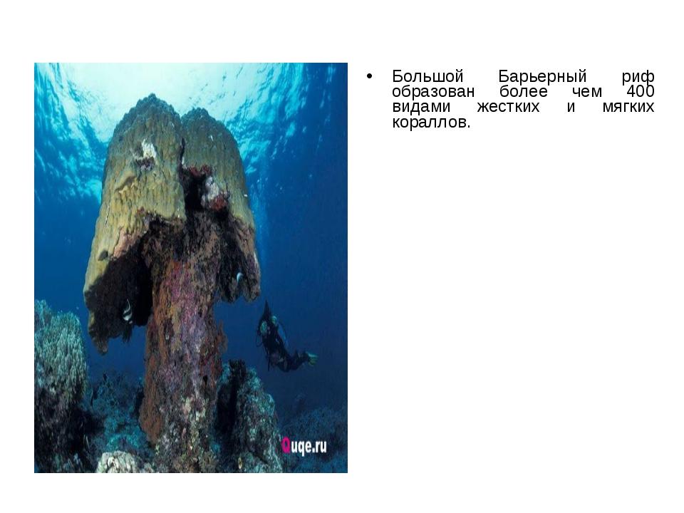 Большой Барьерный риф образован более чем 400 видами жестких и мягких кораллов.