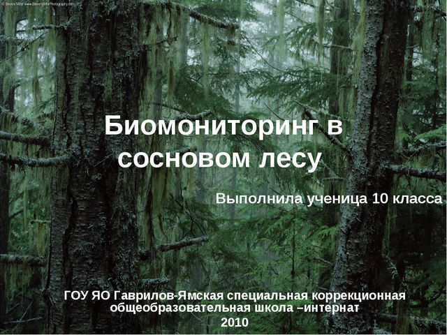 Биомониторинг в сосновом лесу Выполнила ученица 10 класса ГОУ ЯО Гаврилов-Ямс...