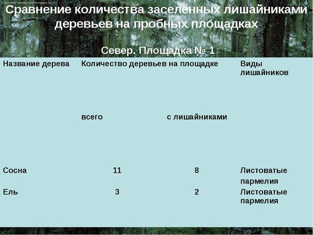 Сравнение количества заселённых лишайниками деревьев на пробных площадках Сев...