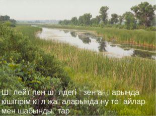 Шөлейт пен шөлдегі өзен аңғарында кішігірім көл жағаларында ну тоғайлар мен ш