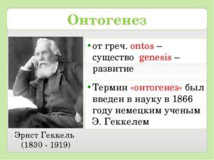 Онтогенез от греч. ontos – существо genesis – развитие Эрнст Геккель (1830 -