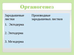 Органогенез Зародышевые листки Производные зародышевых листков Эктодерма 2. Э