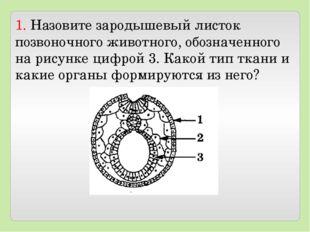 1. Назовите зародышевый листок позвоночного животного, обозначенного на рисун