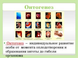 Онтогенез Онтогенез – индивидуальное развитие особи от момента оплодотворения