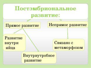 Прямое развитие Непрямое развитие Развитие внутри яйца Внутриутробное развити