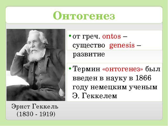 Онтогенез от греч. ontos – существо genesis – развитие Эрнст Геккель (1830 -...