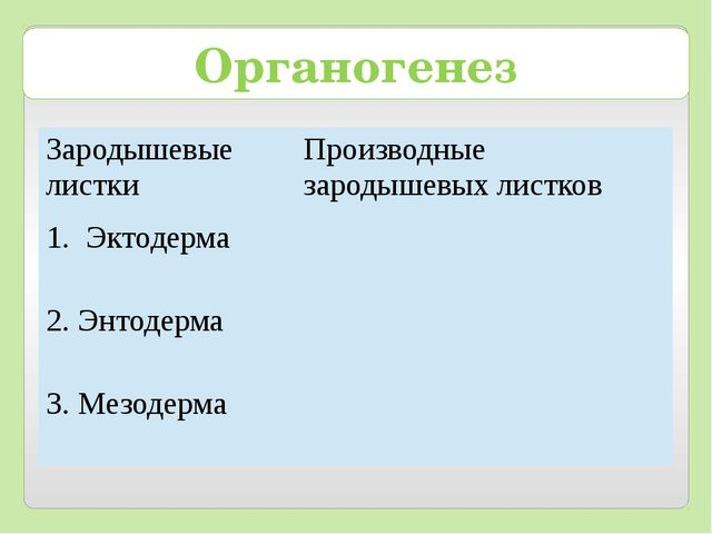 Органогенез Зародышевые листки Производные зародышевых листков Эктодерма 2. Э...