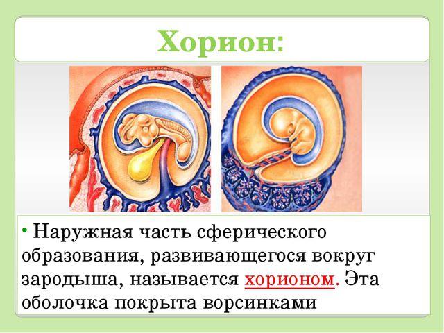 Хорион: Наружная часть сферического образования, развивающегося вокруг зароды...