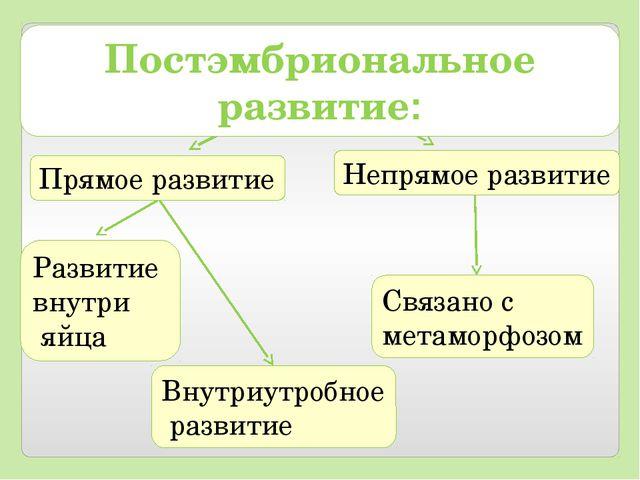 Прямое развитие Непрямое развитие Развитие внутри яйца Внутриутробное развити...