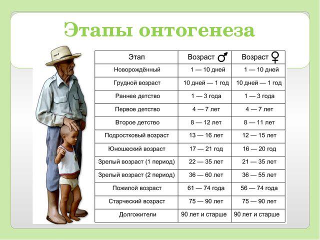Этапы онтогенеза человека: