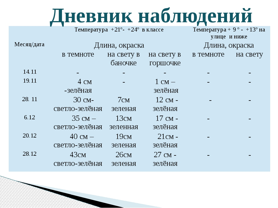 Дневник наблюдений Температура+21º- +24º в классе Температура+9º- +13º на ул...