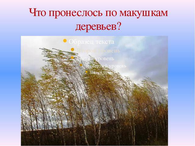 Что пронеслось по макушкам деревьев?
