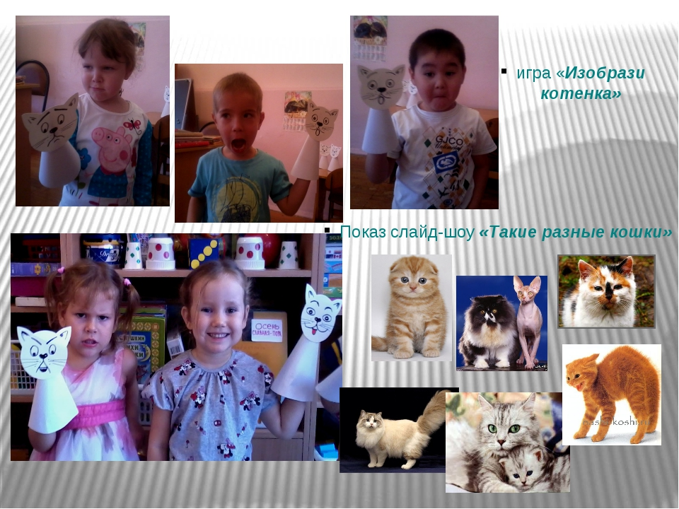 игра «Изобрази котенка» Показ слайд-шоу «Такие разные кошки»