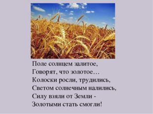 Поле солнцем залитое, Говорят, что золотое… Колоски росли, трудились, Светом