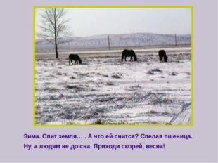 Зима. Спит земля… . А что ей снится? Спелая пшеница. Ну, а людям не до сна.