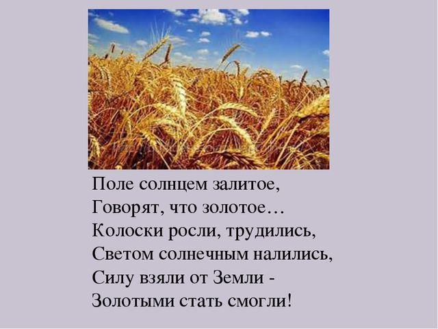 Поле солнцем залитое, Говорят, что золотое… Колоски росли, трудились, Светом...