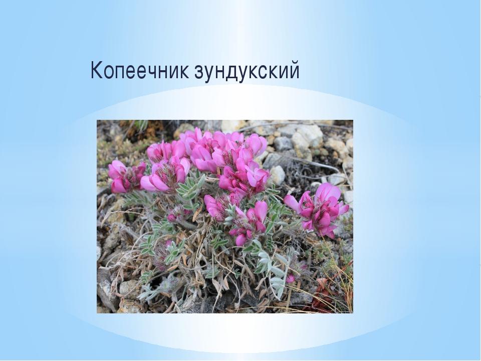 Копеечник зундукский