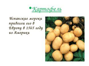 Картофель Испанские мороки привезли его в Европу в 1565 году из Америки