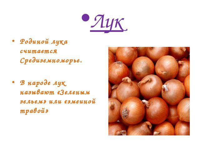 Лук Родиной лука считается Средиземноморье. В народе лук называют «Зеленым зе...