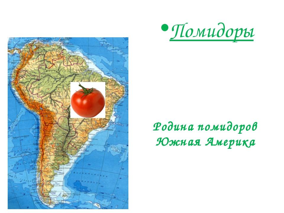 Помидоры Родина помидоров Южная Америка